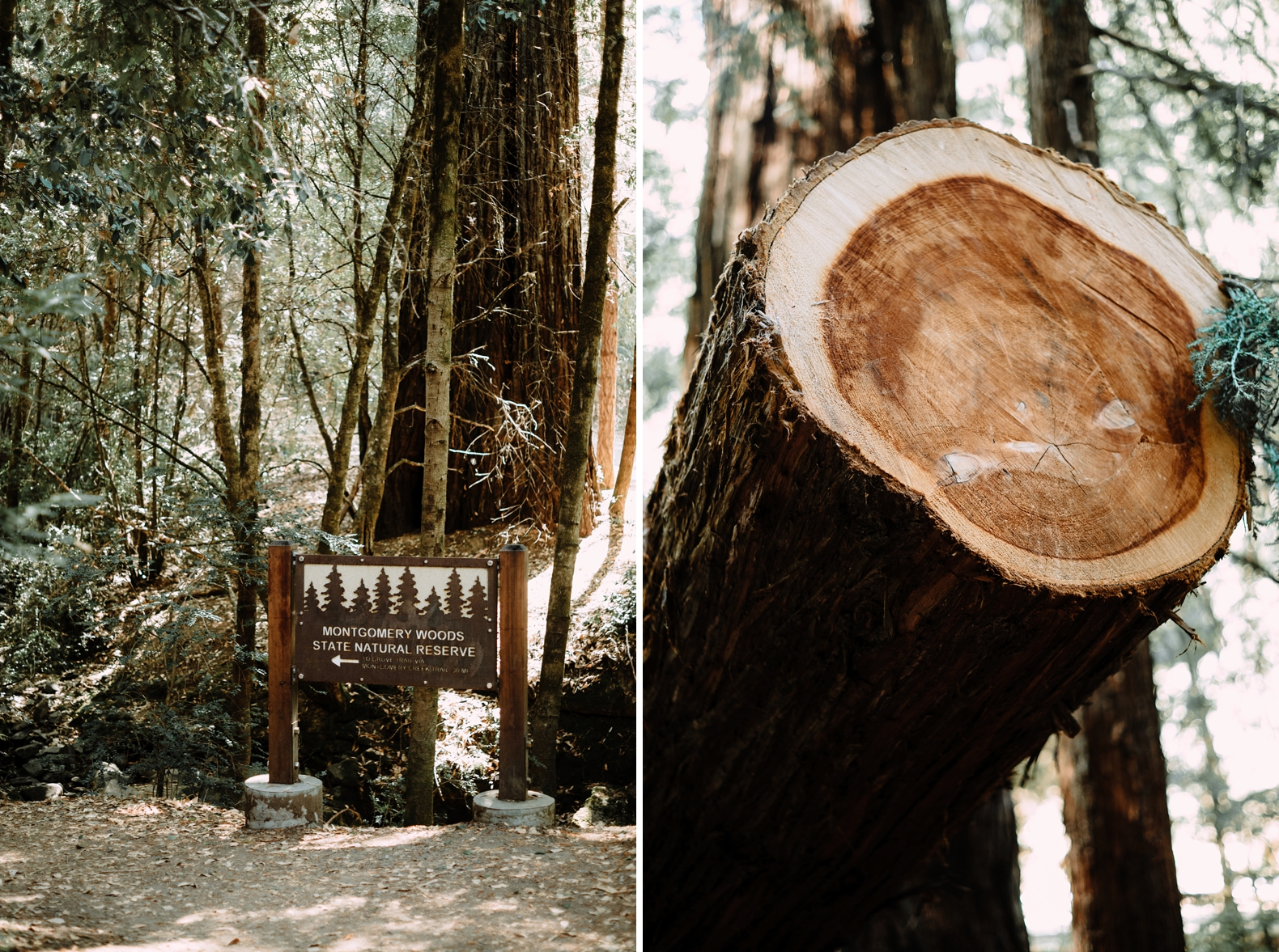 redwood-forest-elopement-0003