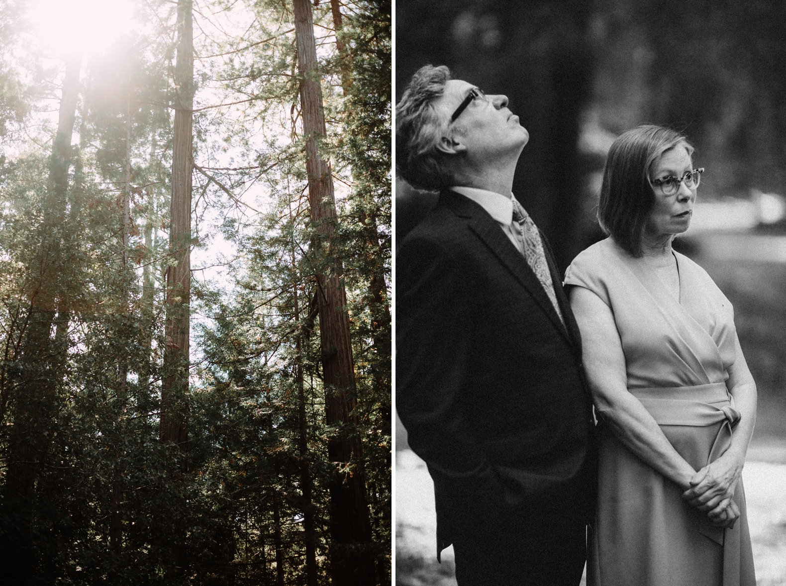 redwood-forest-elopement-0019