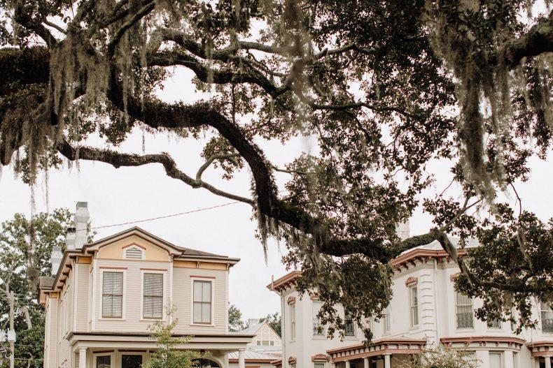 mossy oak trees above historic savannah homes